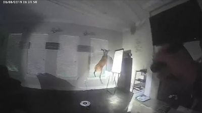 Suspected burglar in the US turns out to be deer