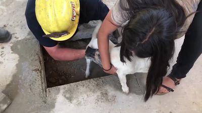 Dog rescued by firefighters after getting stuck underneath patio