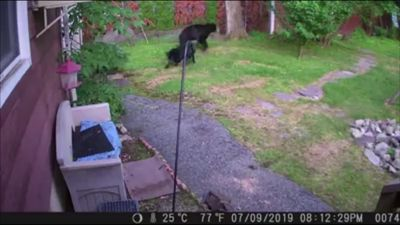 Dog chases bear out of back garden in New Jersey