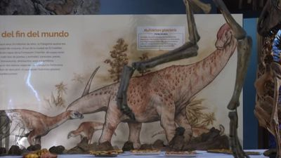 Argentine scientists find new dinosaur species