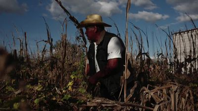 Climate change bites in Mexico's cradle of corn