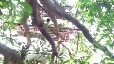 India's poor pushed to live in trees for isolation