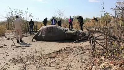 Botswana gets first test results on elephant deaths