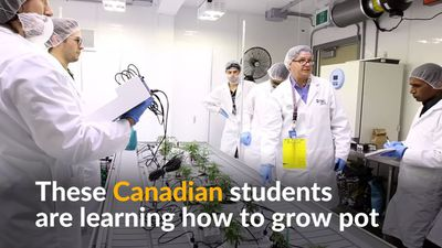 Canadian students go to college to learn how to grow pot