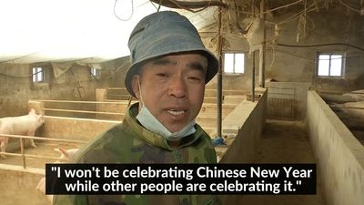 China's pig farmers find little to celebrate ahead of Year of the Pig