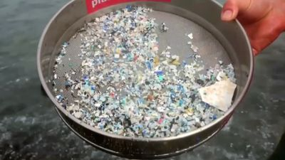 Health risk of microplastics in water is low: WHO