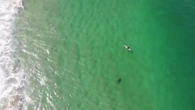 Drone delivers shark warning to surfer