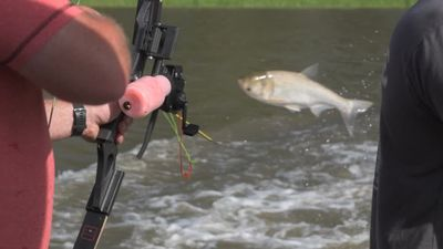Battling invasive fish with bows and arrows