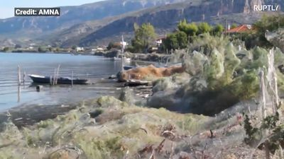 Massive spiderweb casts cloaks Greek shoreline