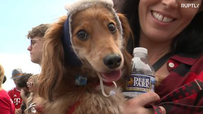 The Wiener takes it all! Dachshund race opens Octoberfest season