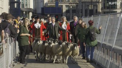 Freemen lead flock of sheep across London Bridge in Middle Age tradition