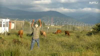 Cow-watch! Retired police officer dutifully prevents cows from invading Batumi airport runway