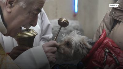All creatures great and small flock to Madrid for blessing