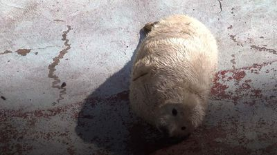 Three cute seal pups born at Kaliningrad Zoo