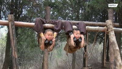 Little monks swinging in a tree! 6y/o trainees exhibit remarkable feats of strength