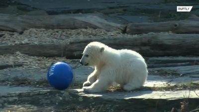 Berlin's new baby polar bear named 'Hertha' after local football club