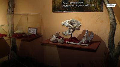 Remains of 700,000-year-old giant bear found in San Pedro