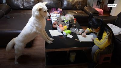 Chinese dad trains dog to make sure daughter does homework