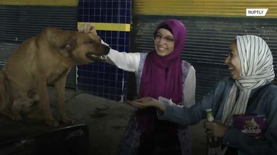 Cairo's stray animals get a 'Meow Iftar' meal from Ramadan volunteers
