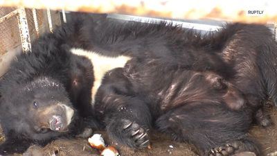 Five-year-old rescued black bear finds new home