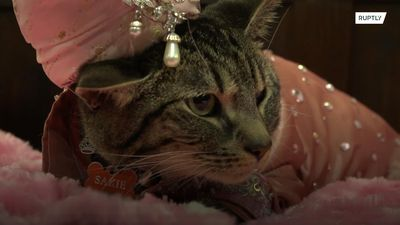 MEOWdels' take to the catwalk for NYC fashion show