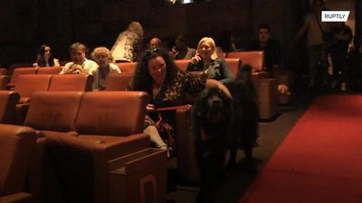 Who let the dogs in? - Glasgow cinema holds screenings for your pooch