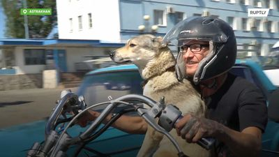 Meet the motorbike-crazy dog who likes speed as much as her owner