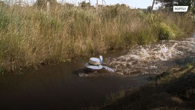 Dirty play! Dozens flock to Wales for World Bog Snorkelling Championship