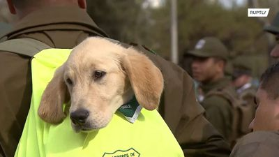 Military PUPPIES steal spotlight at annual parade in Santiago
