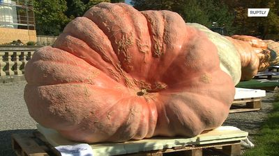PUMPKIN weighing 1,013 kg scoops first prize in Ludwigsburg contest