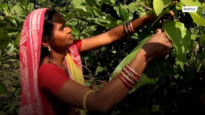 A plastic ban in India's Odisha is empowering women who make plates out of leaves