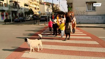 Meet Eeyore the dog who helps kids cross the road in Batumi