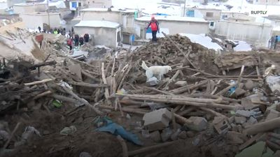 Dog helps rescue teams after 5.7-magnitude quake kills 9 near Iran border