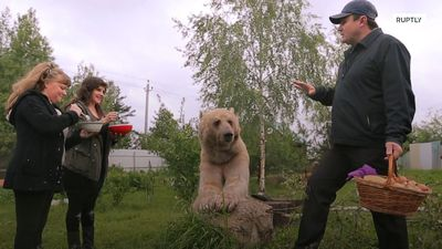 Russian families raise wild bears in their homes