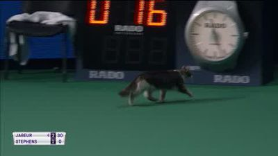 Cat stops play during Sloane Stephens' Kremlin Cup match