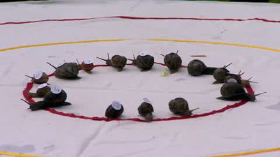 'Ready, Steady - Slow!' Snail Racing Championship