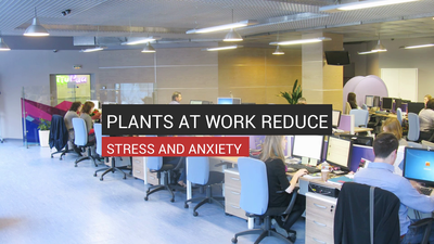 How Keeping Plants On Your Desk Can Reduce Stress