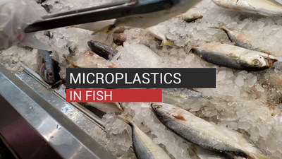 Microplastics In Fish