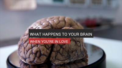 What Happens to Your Brain When You're In Love