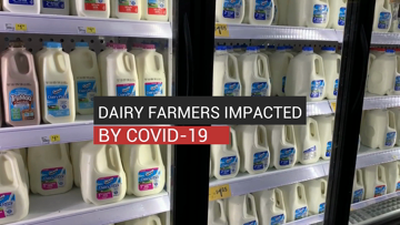 Dairy Farmers Impacted by COVID-19
