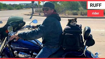 Meet Rocket the motorcycle dog