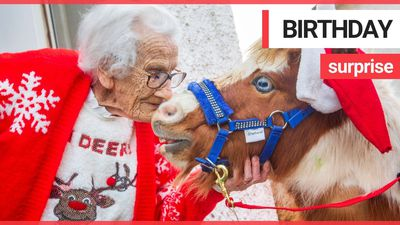 Miniature horses dressed as Santa surprise 95-year-old on her birthday