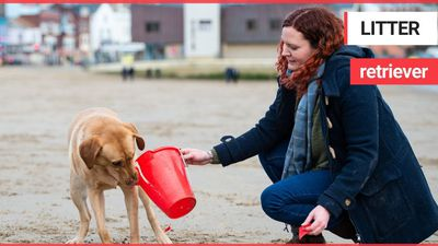 A dogged effort to clean a beach of its rubbish has seen 250,000 items removed off the seafront - by