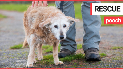 Meet one of Britain's oldest dogs - a 20-year-old terrier