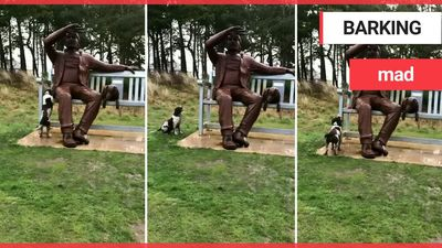 Dog pesters a giant STATUE to throw its ball!