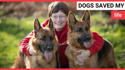 Dog lover says her two German shepherds detected her breast CANCER