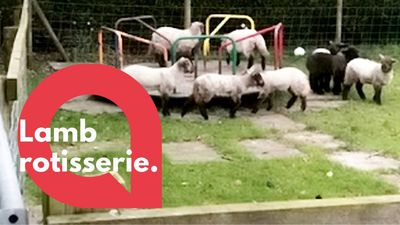 Video shows lambs getting their daily exercise on a kids' ROUNDABOUT