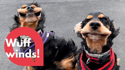 Adorable dogs captured with their mouths flapping in the wind