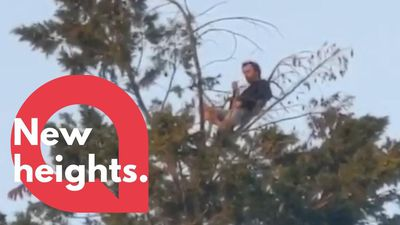 Man caught eating a picnic up a 60ft TREE