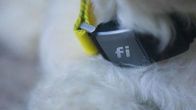 Fi smart GPS dog collar